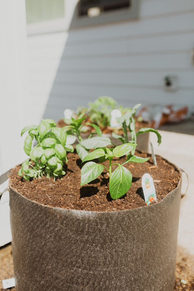How to Start A Small Container Garden